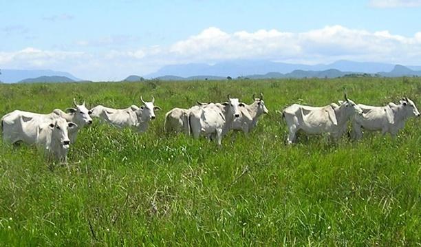 Agricultura e Pecuária no Brasil