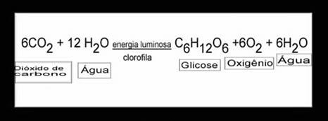 Equação geral da fotossíntese