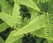 pecuaria-e-agricultura-pteridofitas-1
