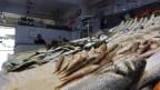 Bayram sonrası kıyı balıkçıları da balıkçı esnafının derdine derman olmadı