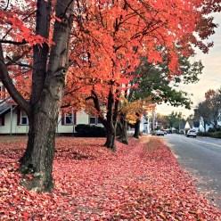 Easthampton Foliage