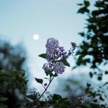Night Fragrance