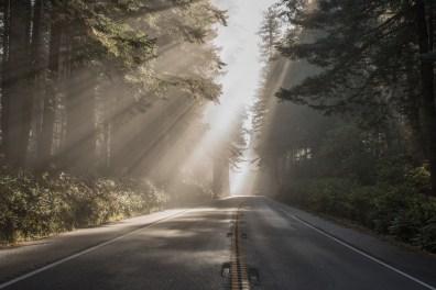 Redwood Highway / California Coast, AZ