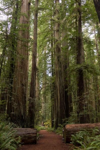 Redwood Highway / California Coast, LB