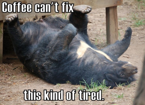 tired-bear