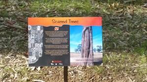 Scarred Tree panel