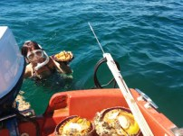Diving for scallops!