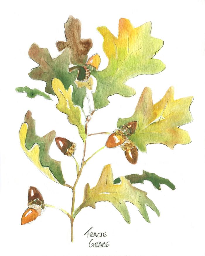 Oak Branch Clean (web)