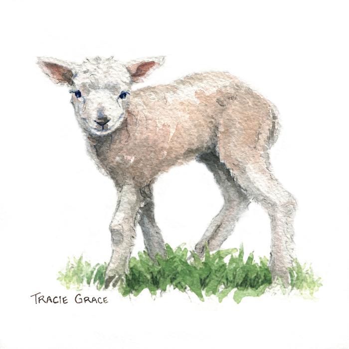 Lamb (web)