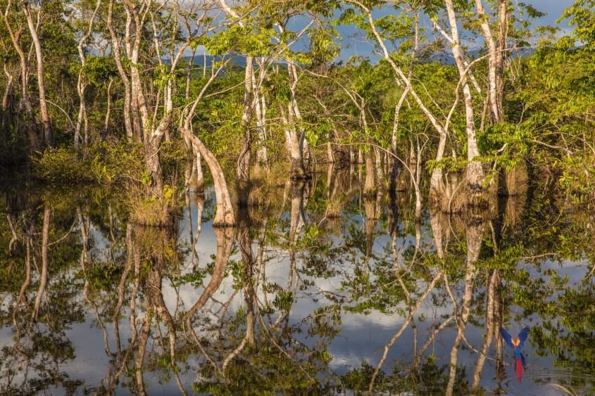 Wetland pool on Coastal Road.