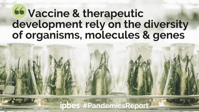 IPBES - Workshop on biodiversity and pandemics