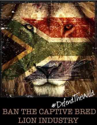 La campagna della EMS Foundation per un Sudafrica senza leoni in gabbia, allevati in cattività e destinati al macello