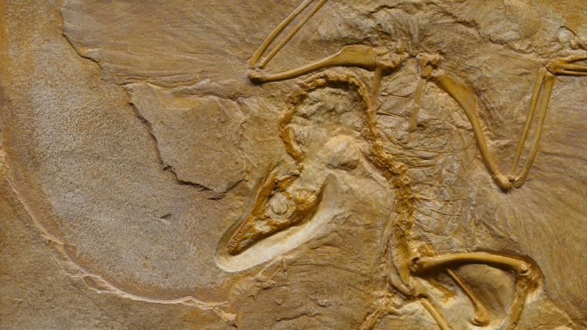 La sesta estinzione sta accelerando. Questa è solo una delle evidenze impressionanti raccolte da uno studio di grande impatto appena uscito sulla PNAS (Vertebrates on the brink as indicators of biological annihilation and the sixth mass extinction).