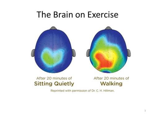 Brain After Exercise