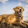Gründe, warum auch du einen Hund brauchst