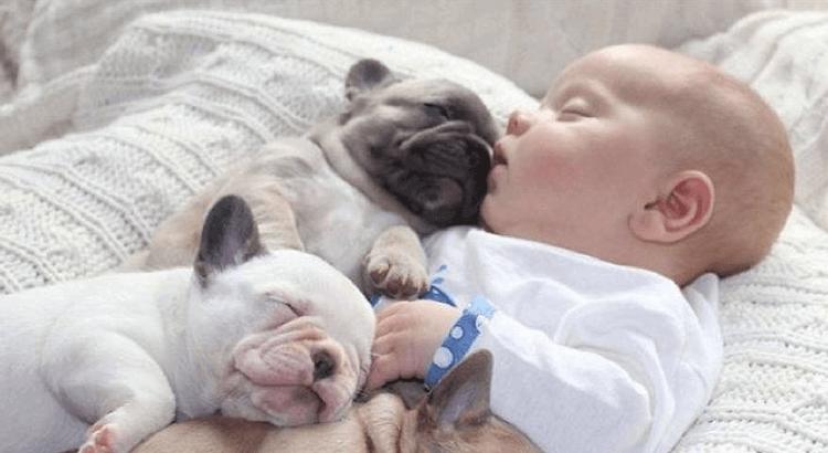 Umgang mit Kind&Hund