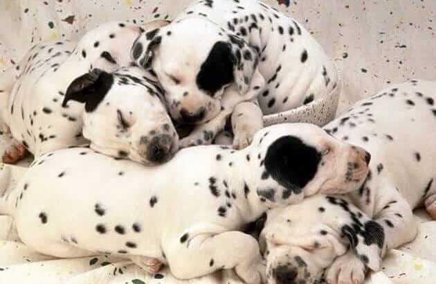 Interessante Zahlen und Fakten über Haustiere_Beitragsbild