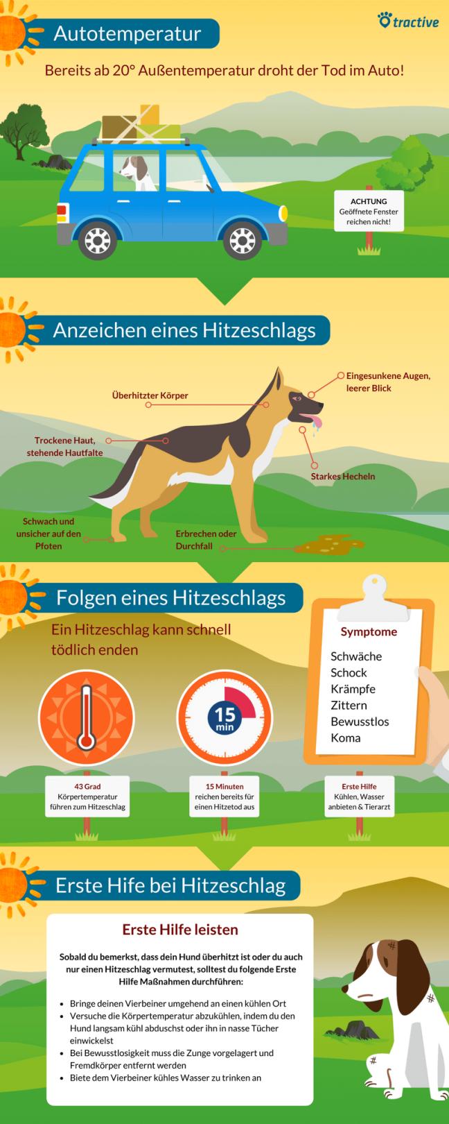 Infografik Hund und Hitze