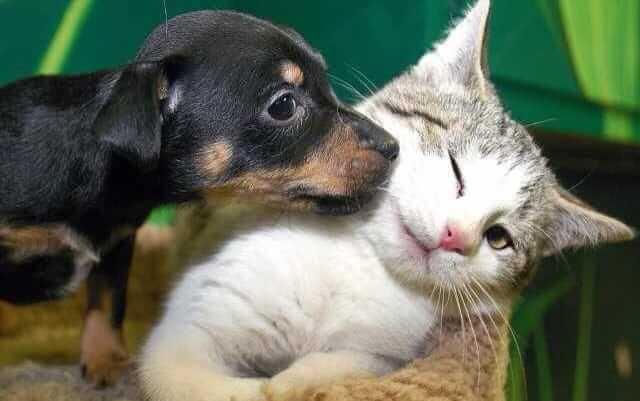 Fakten über Haustiere
