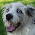 most popular dog names