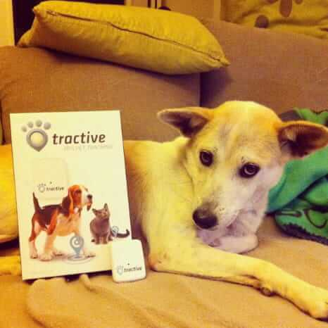 Rufus is happy with his new Tractive GPS