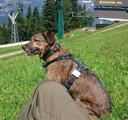 nero wearing tractive gps and his owner are hiking