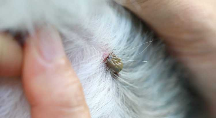 Tick control for dogs
