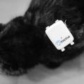 GPS Katzenortung