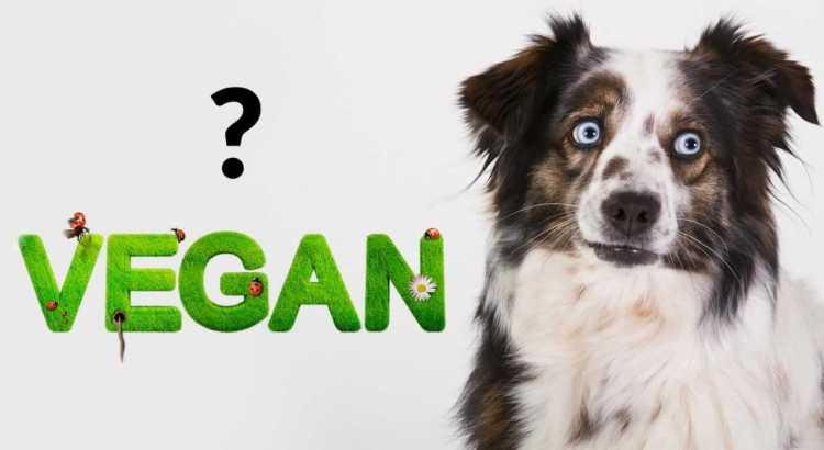 Hund vegan ernähren