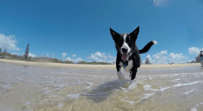 Urlaub mit Hund am Meer