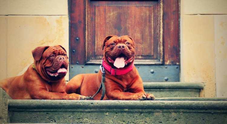 Stadthund - ein Hundeleben in der Großstadt