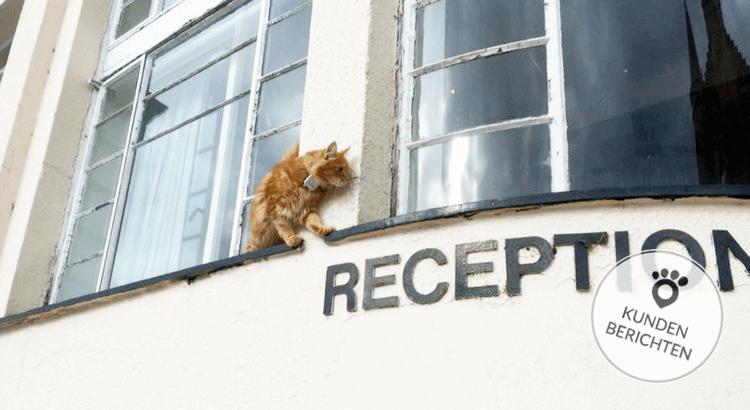 Cat tracker