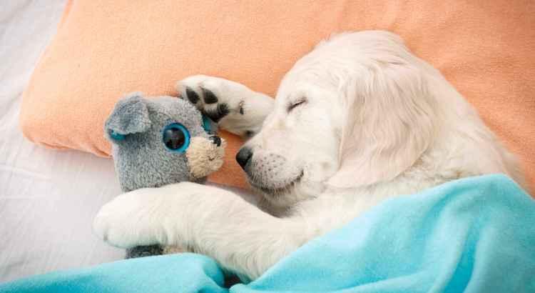 Immunsystem beim Hund stärken