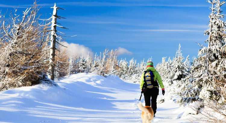 Vacanze invernali con il tuo cane