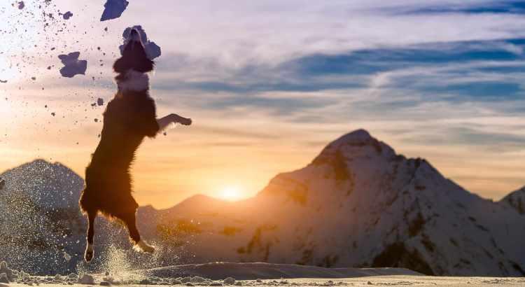 Dog Friendly Winter Activities