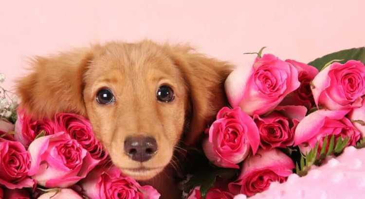 Geschenktipps für Hunde
