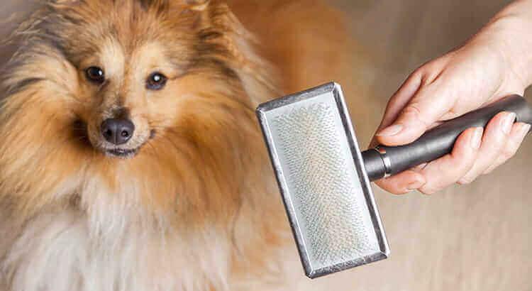 Come comportarsi quando il cane fa la muta?