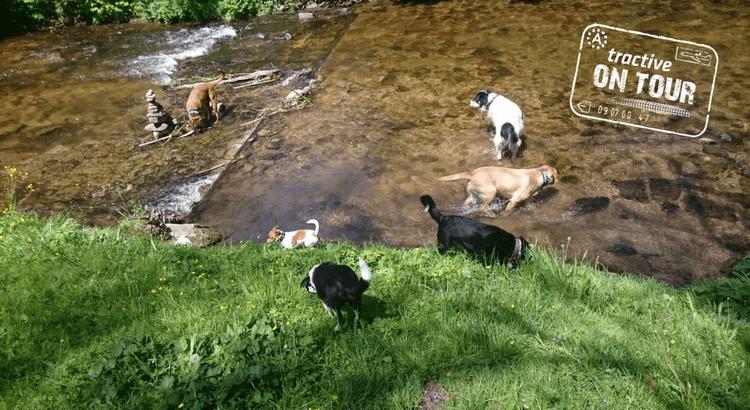 Abenteuer Hund