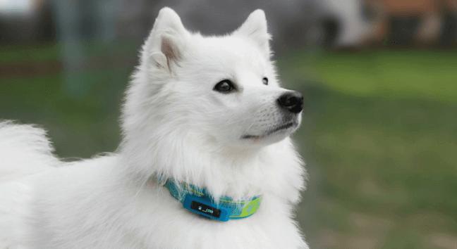 Bewegung Hund