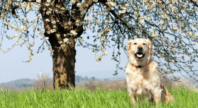 Flirtfaktor Hund