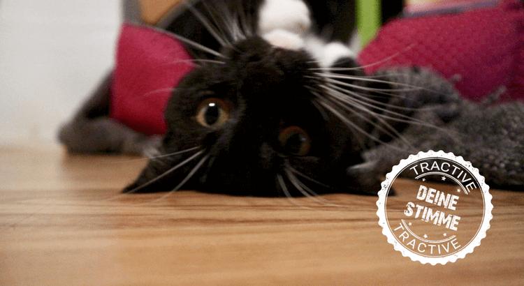 Katzenrettung