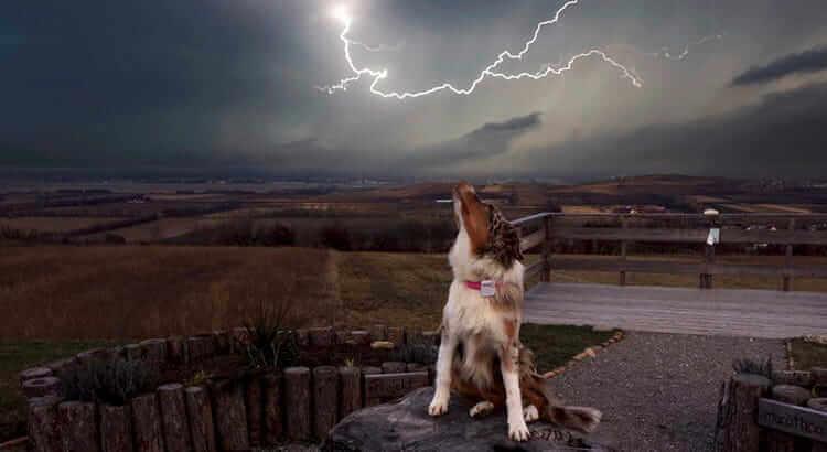 5 cose da fare se il tuo cane ha paura del temporale