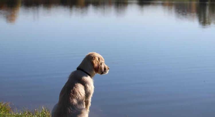 Cane in acqua: i 5 errori da evitare