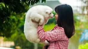 Hundedepression vermeiden
