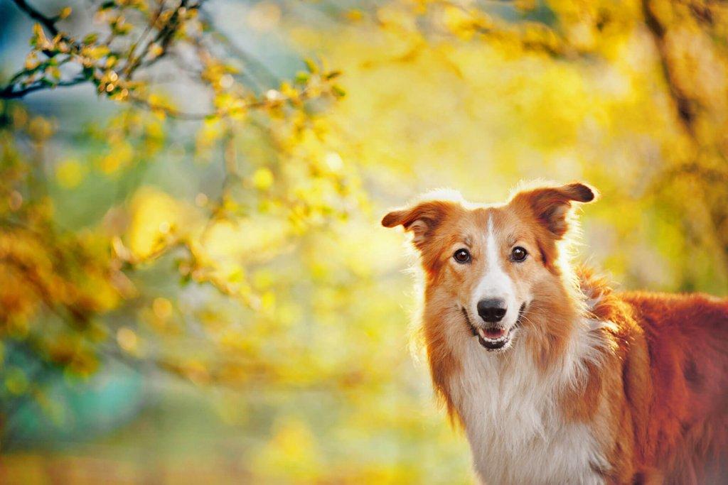 Idealgewicht Für Deinen Hund Mit Dem Bmi Berechnen Tractive