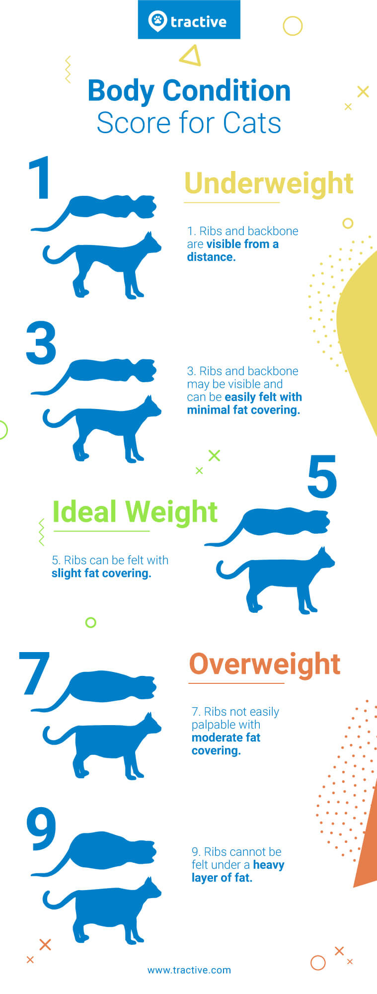 Ideal Cat Weight Chart : ideal, weight, chart, Healthy, Weight, Chart, Picture, Anyimage.Org