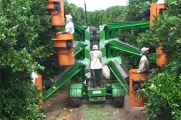 Récolte d'orange mécanisée