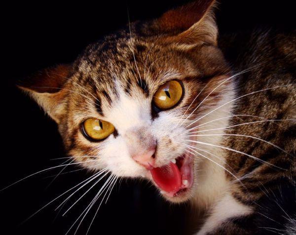 Wildlife killer cat