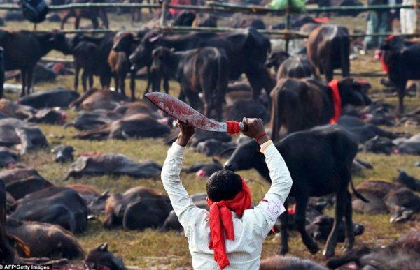 Nepal butcher by Oriana Italy