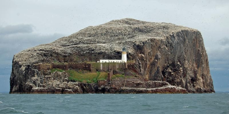 Offshore wind farms threaten northern gannets at Bass Rock